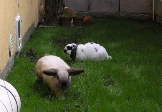 per una casa a dimensione di coniglio - Organizzare Un Giardino Piccolo